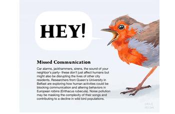 Robin Communication