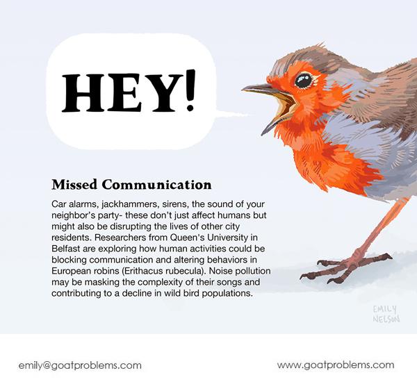 European robin communication and city bird information