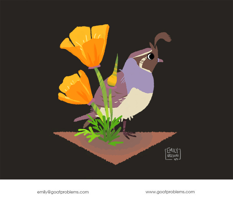Photoshop drawing of a bright California poppy with a cute Gambel's quail.