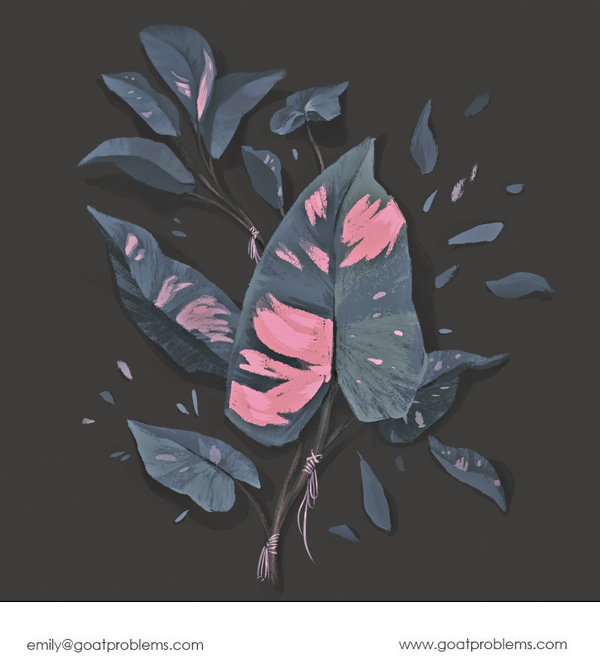Drawing of a pink princess philodendron, a rare plant with bright pink variegated splashes of color on its leaves.